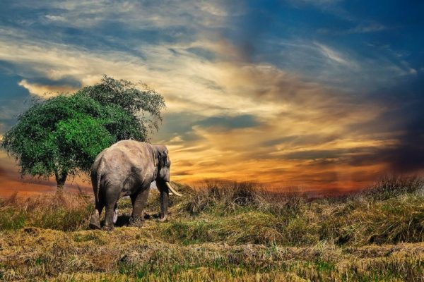 elefante safari musica soundbar