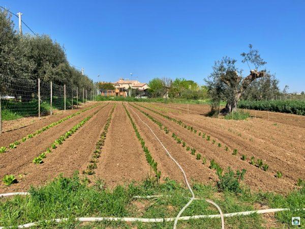 orto ulivi country house in abruzzo