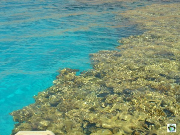 Barriera corallina Sharm El Sheikh