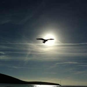 bird in flight photo