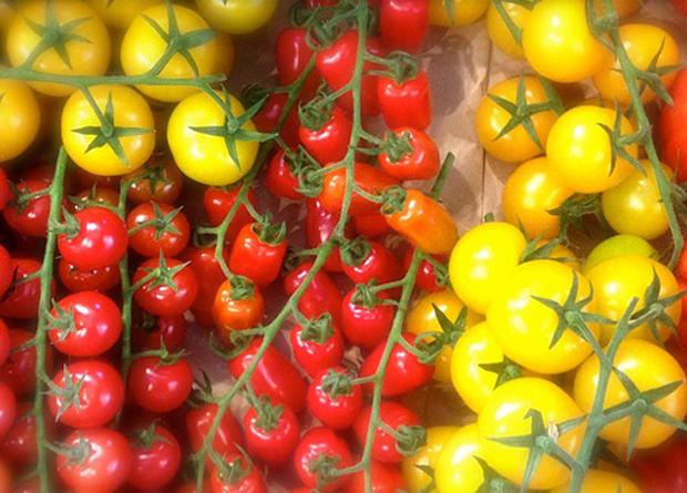 tomate-amarillo3
