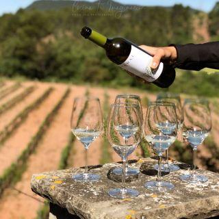 Enoturismo y otras experiencias en «Cataluña para foodies»