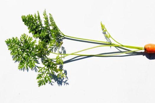 hojas de zanahoria recetas