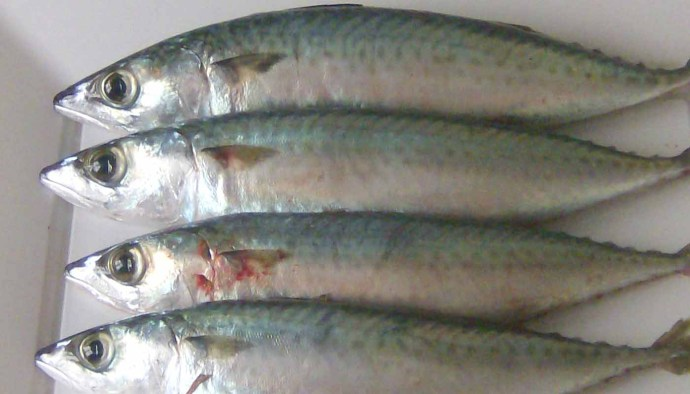 consejos para comprar pescado fresco - como saber cuando el pescado está o es fresco