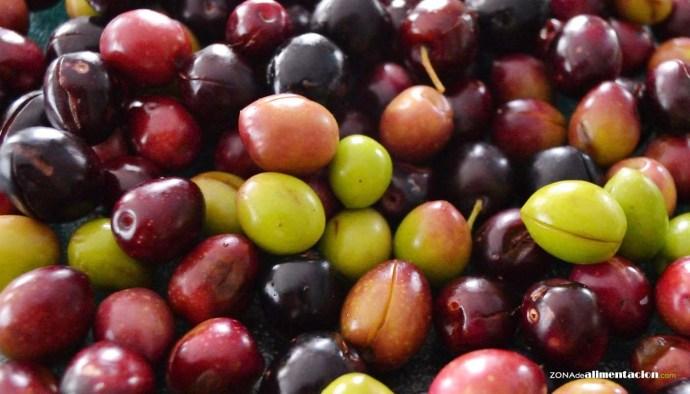 tipos de olivas o aceitunas de mesa - olivas o aceitunas para aperitivos - usos de las olivas o aceitunas en cocina - recetas con olivas o aceitunuas