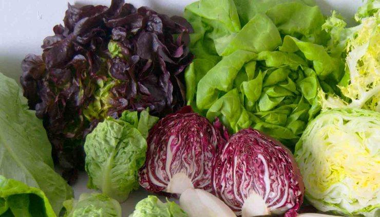 seis variedades de lechugas para enriquecer tus ensaladas