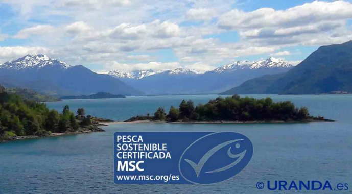 Sello azul MSC, la etiqueta de la pesca sostenible - gastronomía