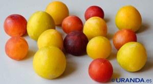 Calendario de frutas y verduras de temporada por meses - frutas y verduras de verano