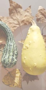 cocina y recetas de otoño - cocineando