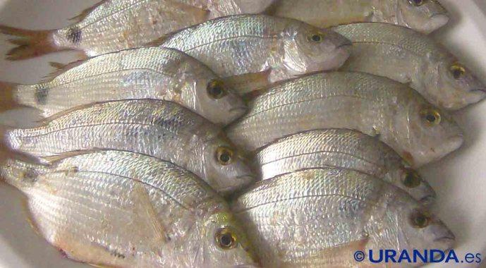 Cómo descongelar el pescado al microondas - trucos de cocina