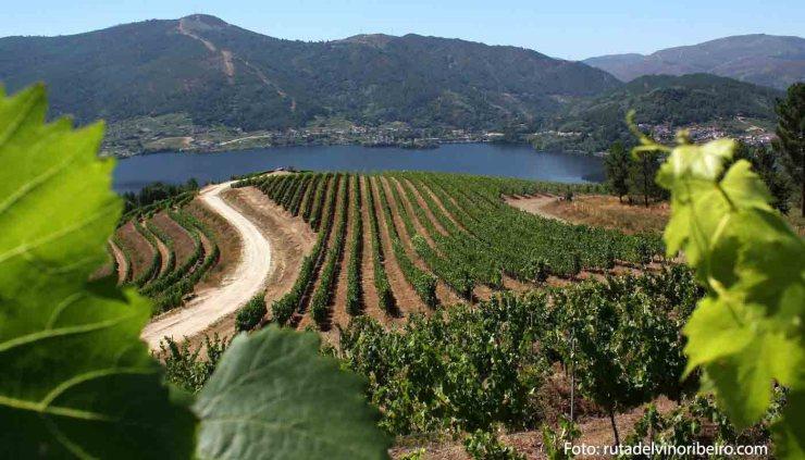 Ruta del vino Ribeiro, enoturismo entre castros y pazos - enoturismo en Galicia - vinos de España
