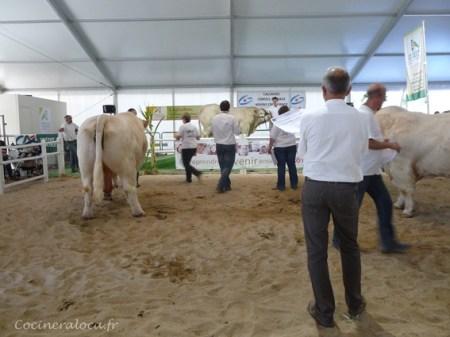 concours de charolais à la foire de Caen 2012