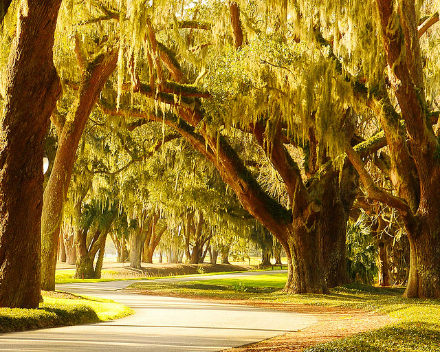 Avenue of the Oaks St Simons Sea Island