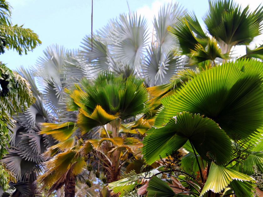 Trees at Clemént estate, Martinique