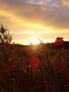 Goldener Sonnenaufang