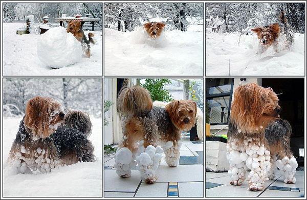 dzivnieki-sniega