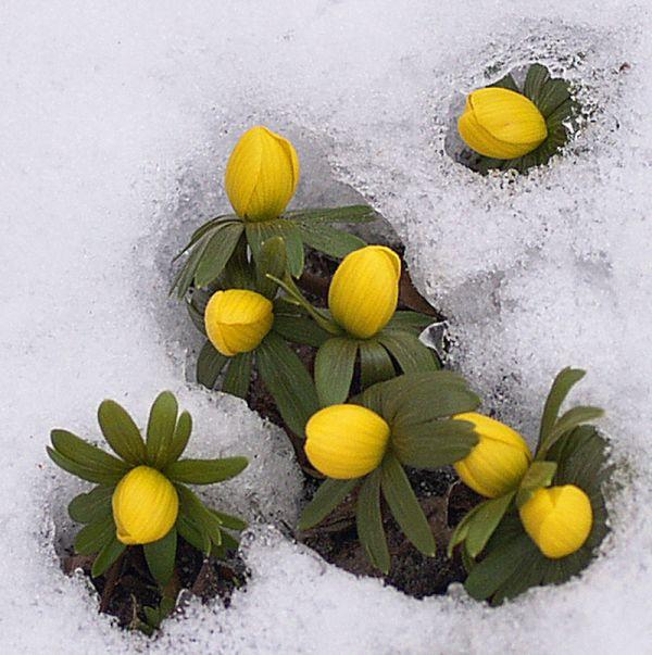 sveiciens-pavasari