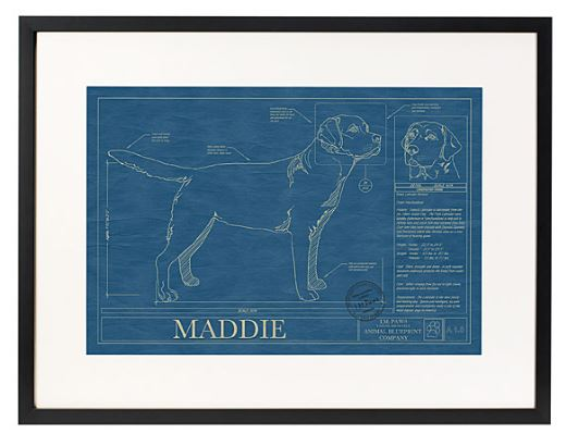 personalised dog blueprint from Uncommon Goods
