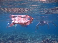 Guests with turtle BIRGIT ELIZABETH during their morning snorkeling trip at Coco Palm Dhuni Kolhu