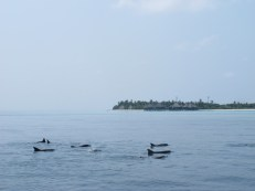 Earth Day Snorkeling with Dolphins at Coco Palm Dhuni Kolhu