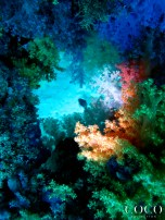 A torch light reveals the colorful world of the soft corals