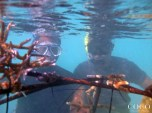 Safely placing the coral frame into the lagoon