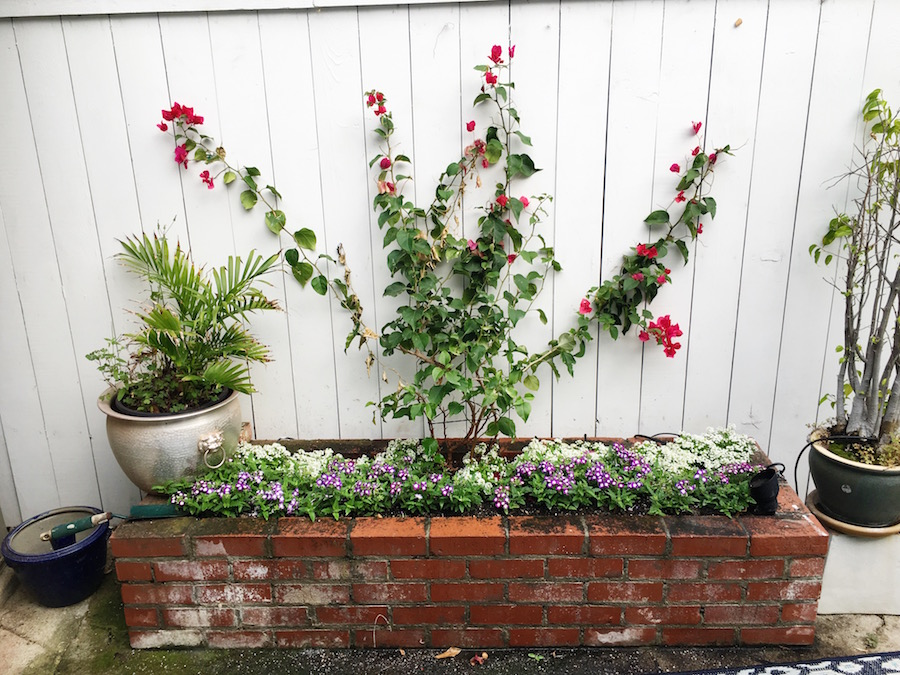 hollywood hills garden brick planter bougainvillea