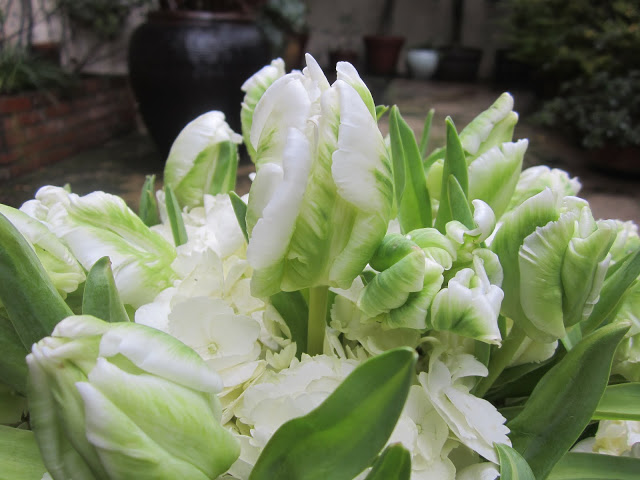 Close up of green and white Parrot Tulips and Hydrangea in a flower arragement on a patio