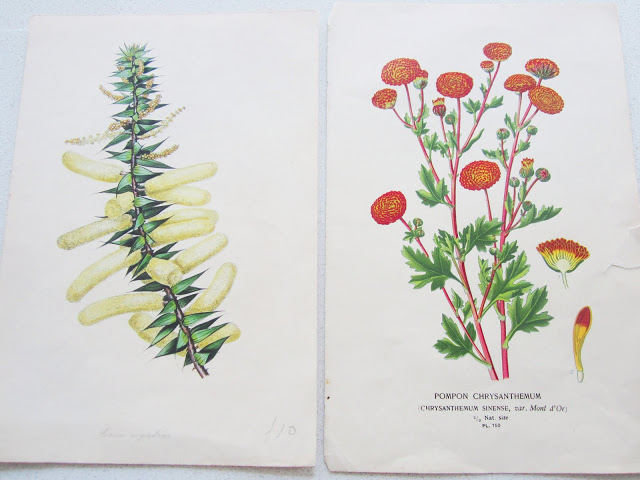two botanical prints from the 1870s