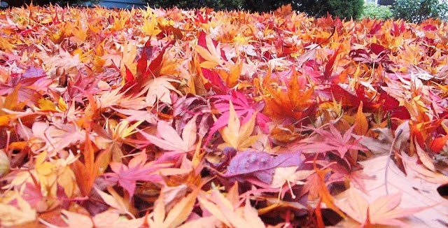 pile of orange, yellow and red fall leaves