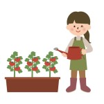 家庭菜園で虫がつかないように対策!おすすめの方法は?
