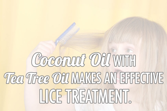 Coconut Oil Lice Treatment Home Remedy