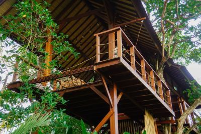 Tree house from below