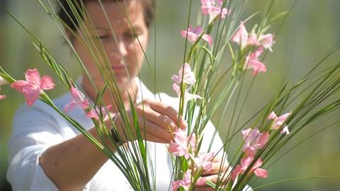 Short course - floristry