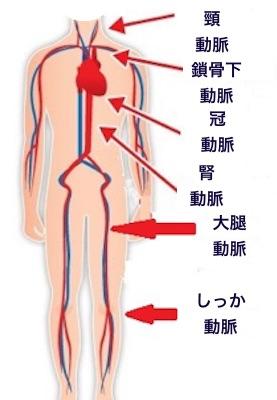 代表的な動脈