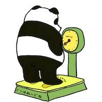 体重を計るパンダ