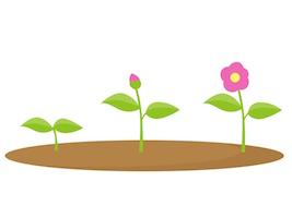 成長する花