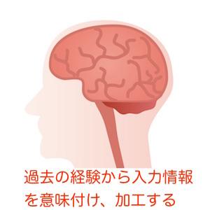 脳の選別・加工