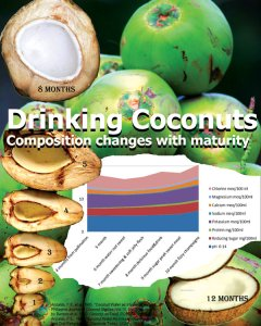 coconut nutritional age analysis