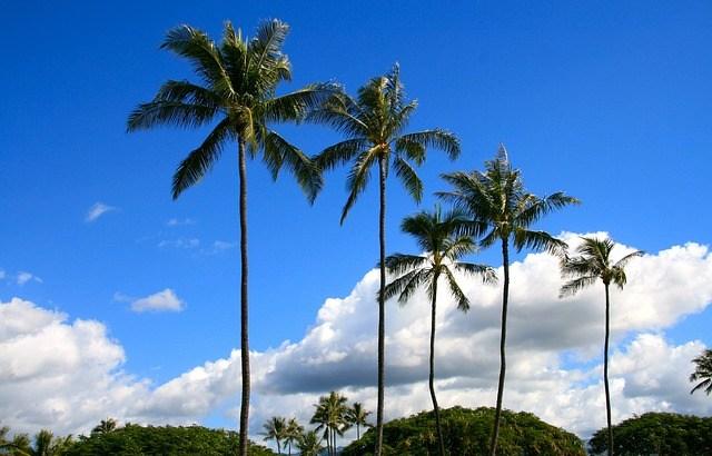 ハワイ旅行、レンタカーを借りよう!