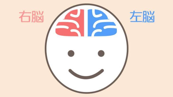 右脳派左脳派で子供のタイプに合った職業を考えてみる