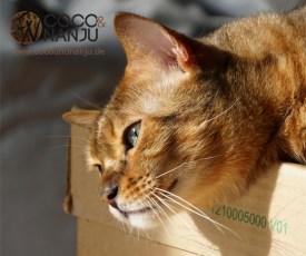 Katzenblog_Nanju_nimmt_Sonnenbad