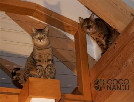 Katzenlog_Coco_und_Nanju_beobachten
