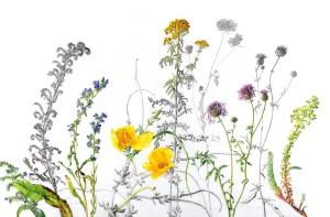 flowers-illustration
