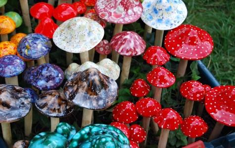 First, marijuana. Are magic mushrooms next?