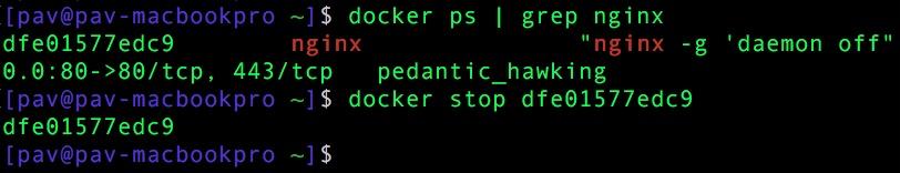 Docker: stop nginx