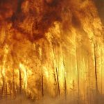 An Unusual Risk - Are Terrorists Lighting Forest Fires?