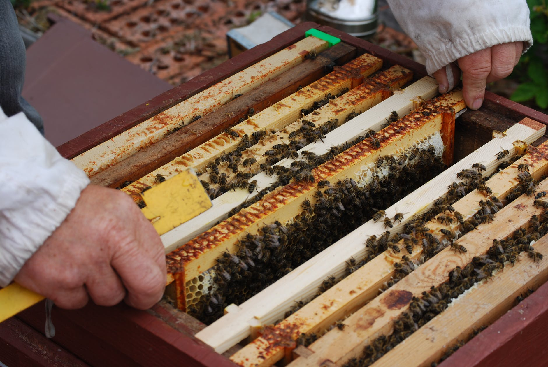 food honeycomb agriculture bee