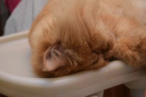 """The cat version of """"facepalm""""."""