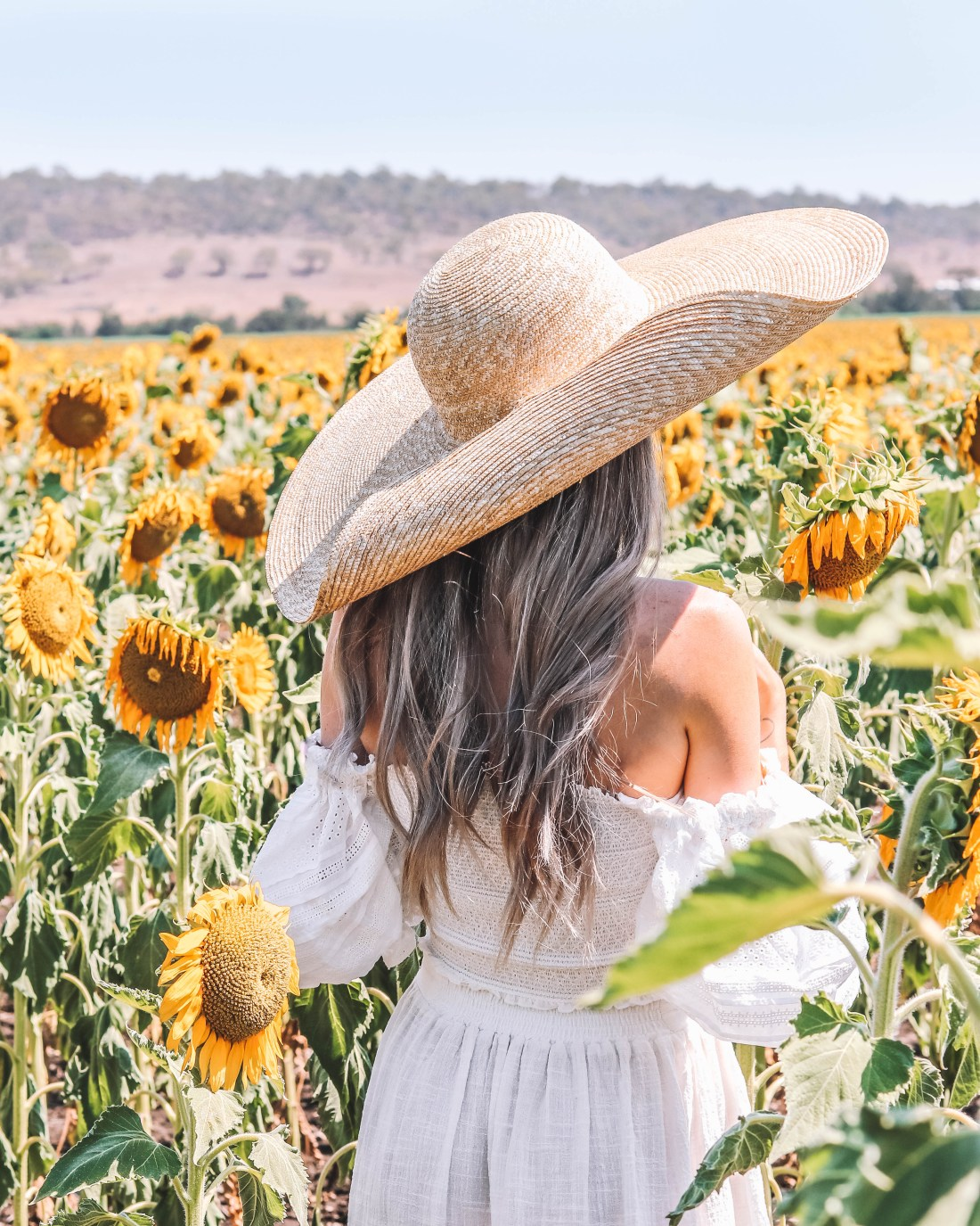Sunflower Fields in Warwick - Codie Zofia